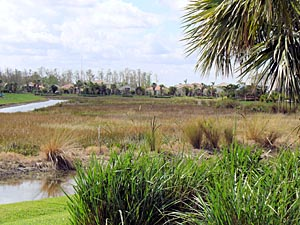 Gulf Coast aquatic weed control, lake weed control, pond weed killer, pond weeds, lake weeds, aquatic weeds, pond weeds, aeration system, pond fountain